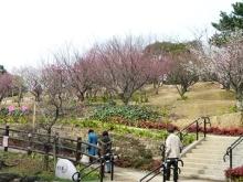 梅の花の季節になりました