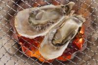 今が旬!牡蠣の季節です